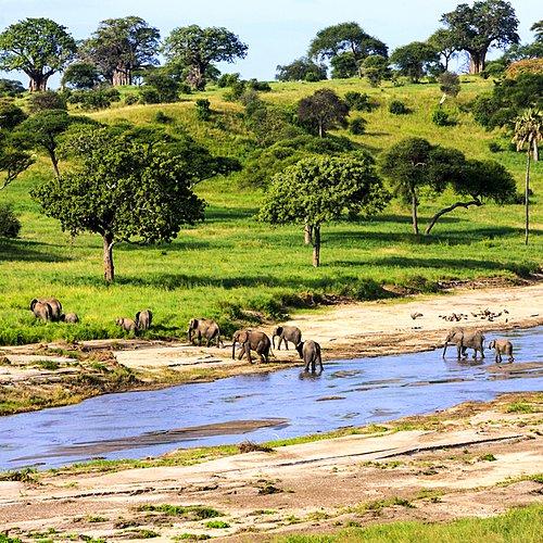 Les grands parcs du Kenya et de la Tanzanie en safari -