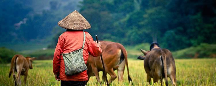 La auténtica experiencia camboyana