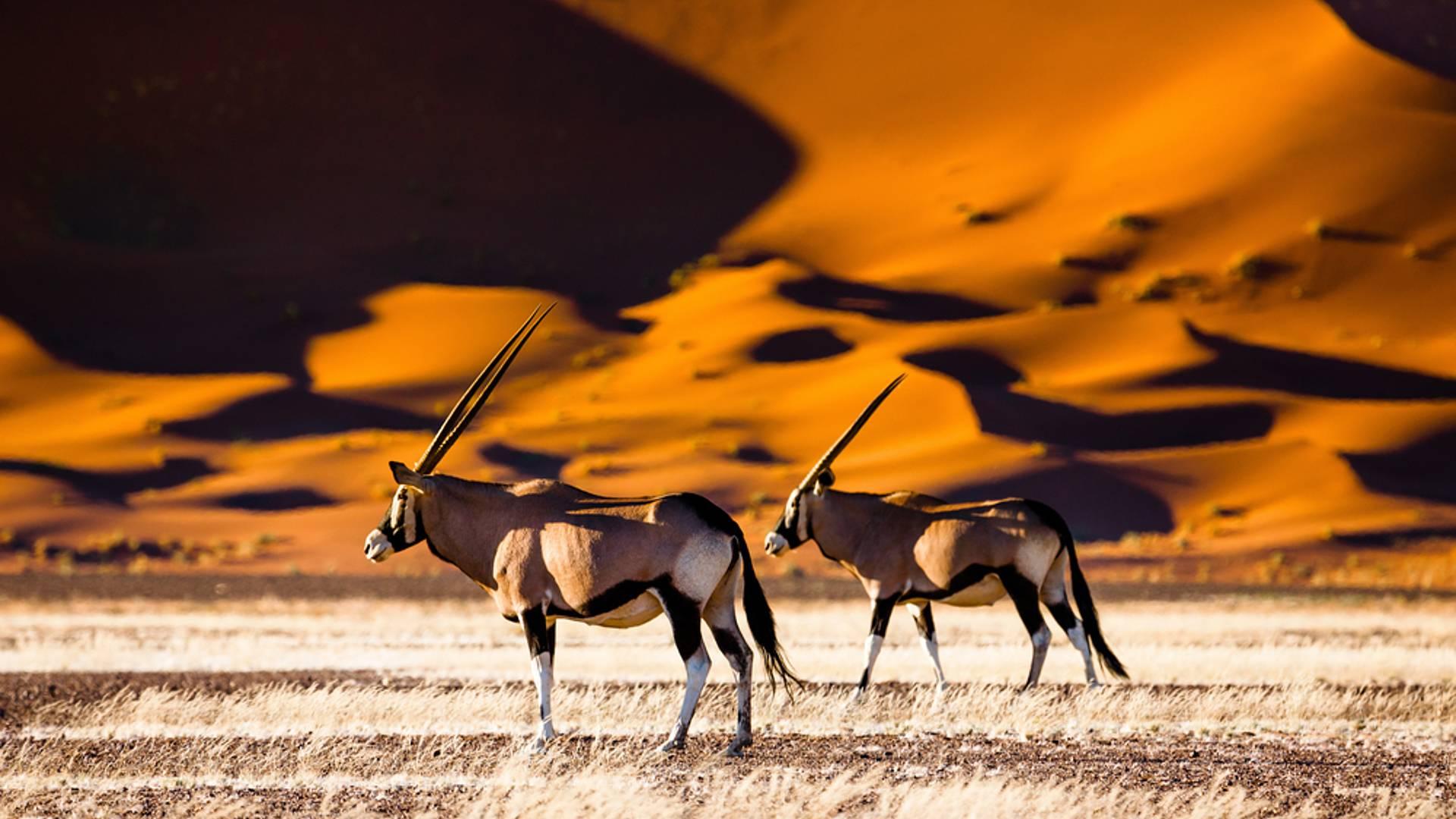 Desierto, etnias y safari