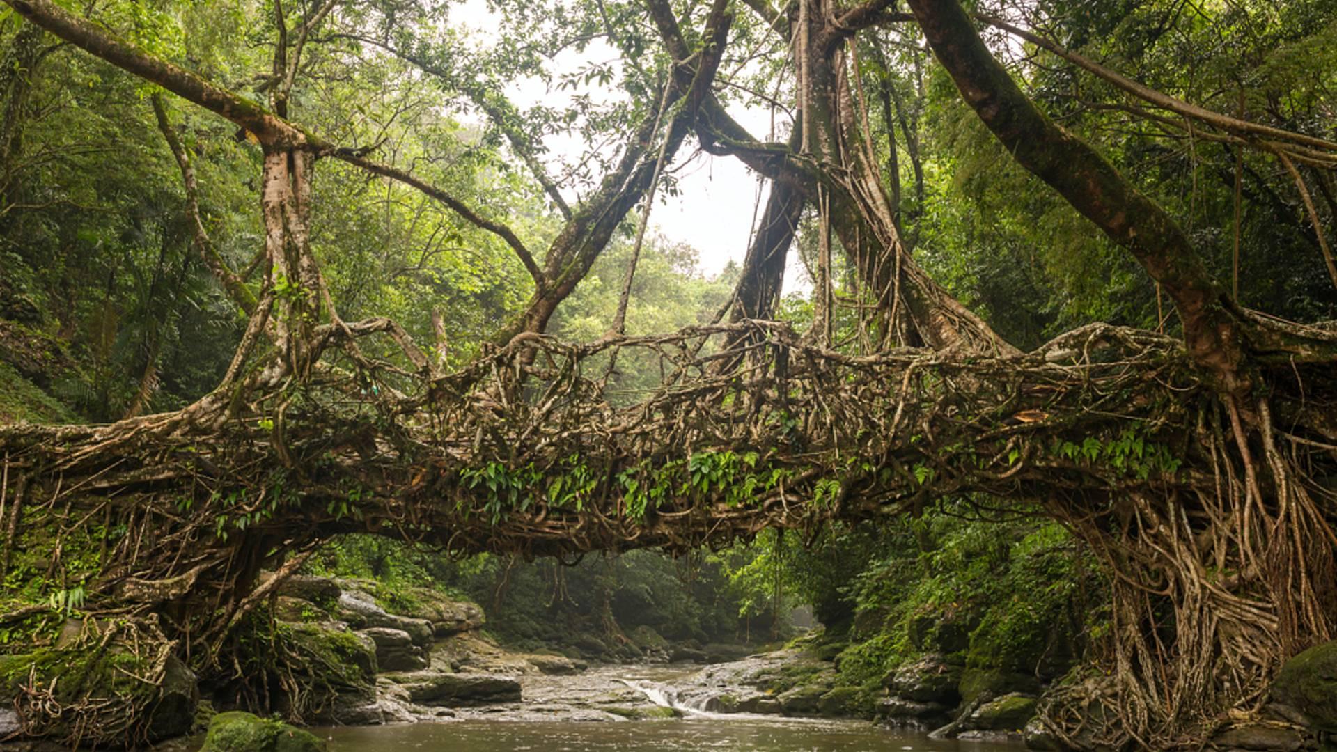 Unglaubliches Nordostindien - Sikkim, Assam und Meghalaya