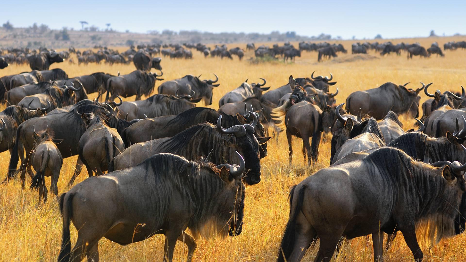 Abenteuer pur im Massai-Mara-Wildreservat