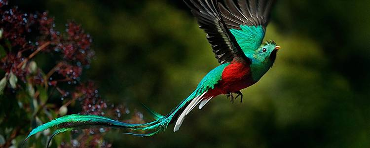 Experience the wildlife of Costa Rica