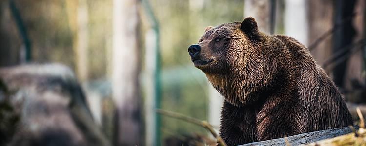 British Columbia y su naturaleza salvaje