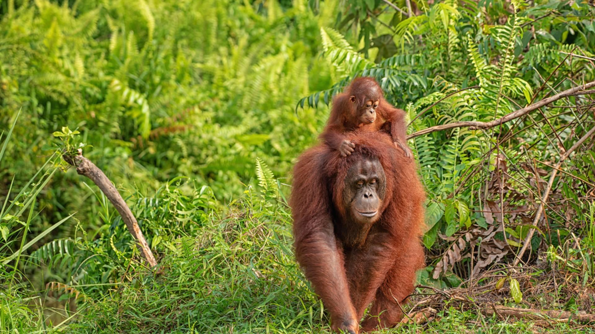 Bornéo, Java, îles Gili - En famille, tête-tête avec la faune tropicale