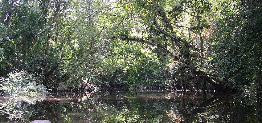 La selva tropical de Camerún