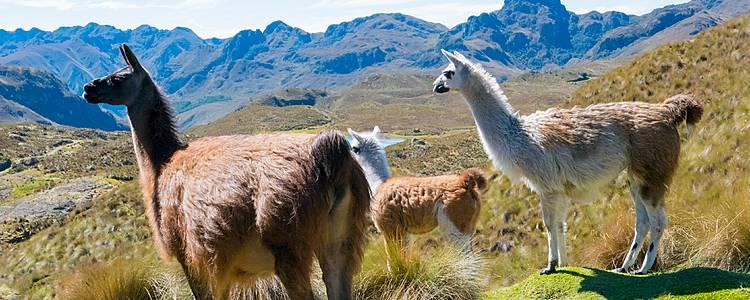 Alla scoperta delle Ande ecuadoriane