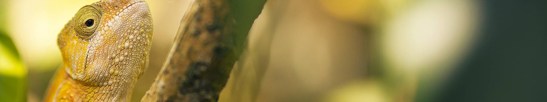 Südmadagaskar