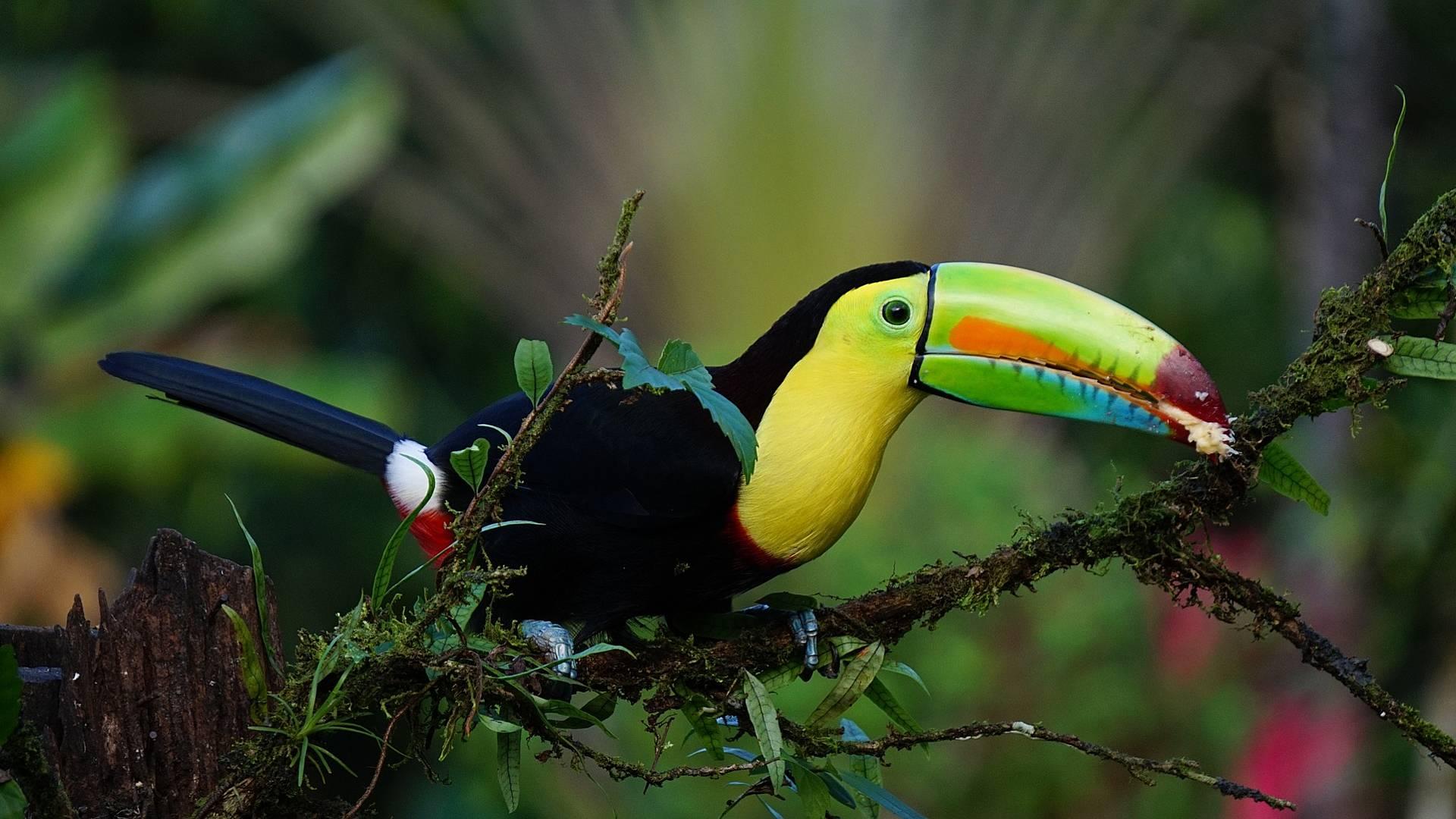 Merveilles de la nature du Costa Rica au Panama