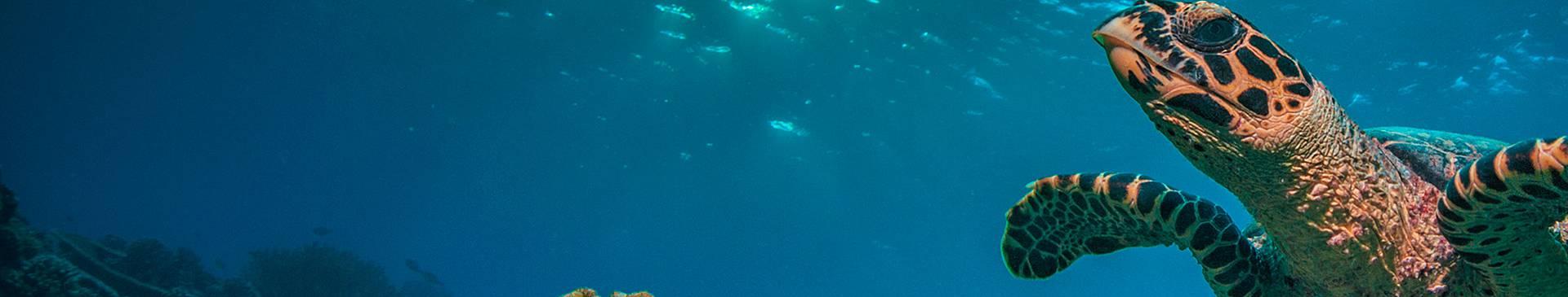Snorkeling e immersioni alle Seychelles