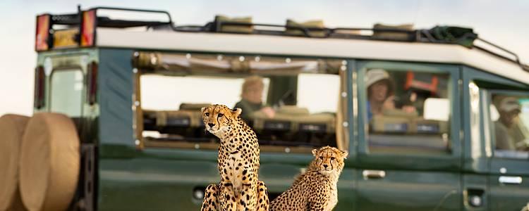 Safari tra Kenya e Tanzania