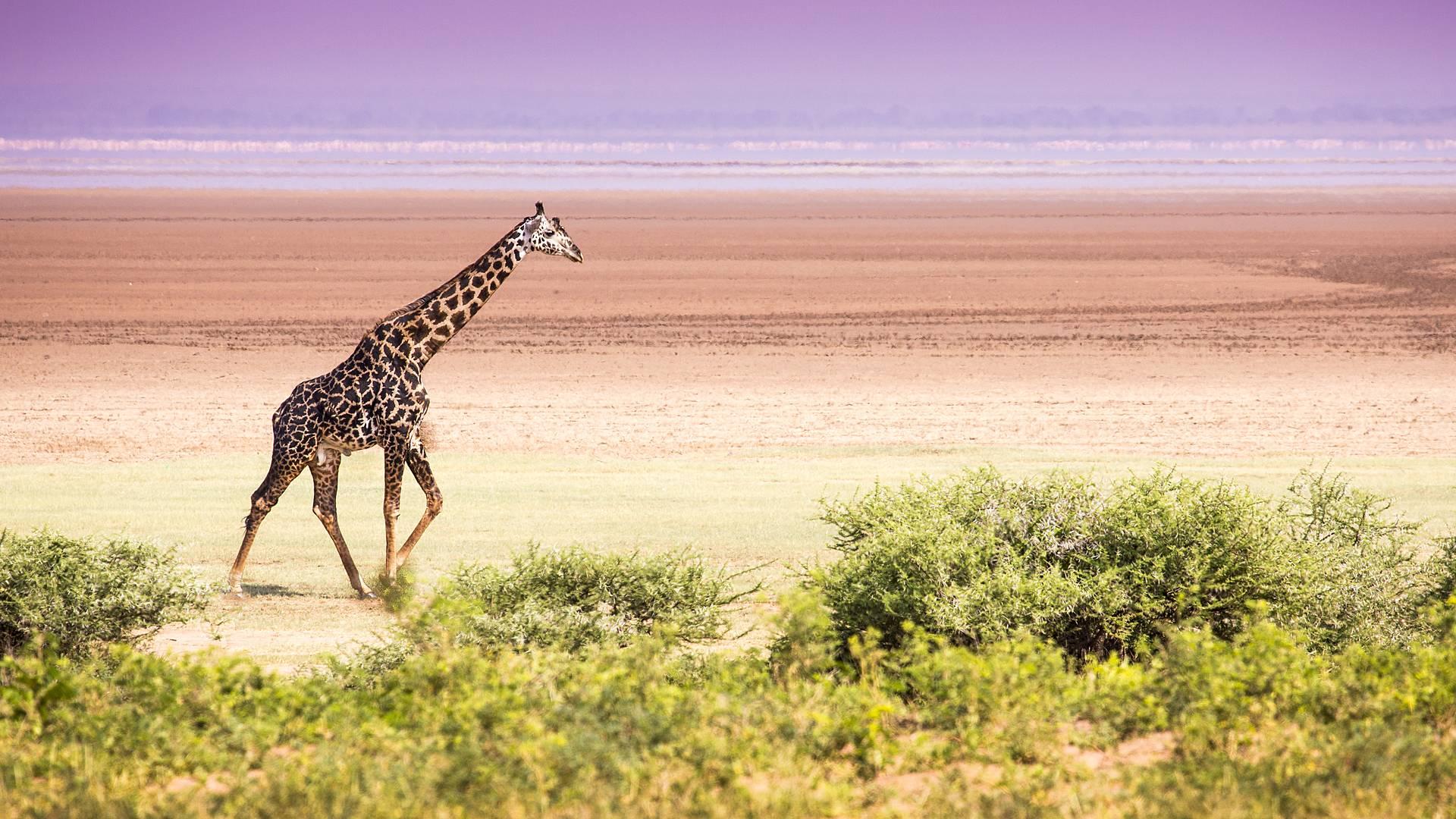 Safari e tribù locali