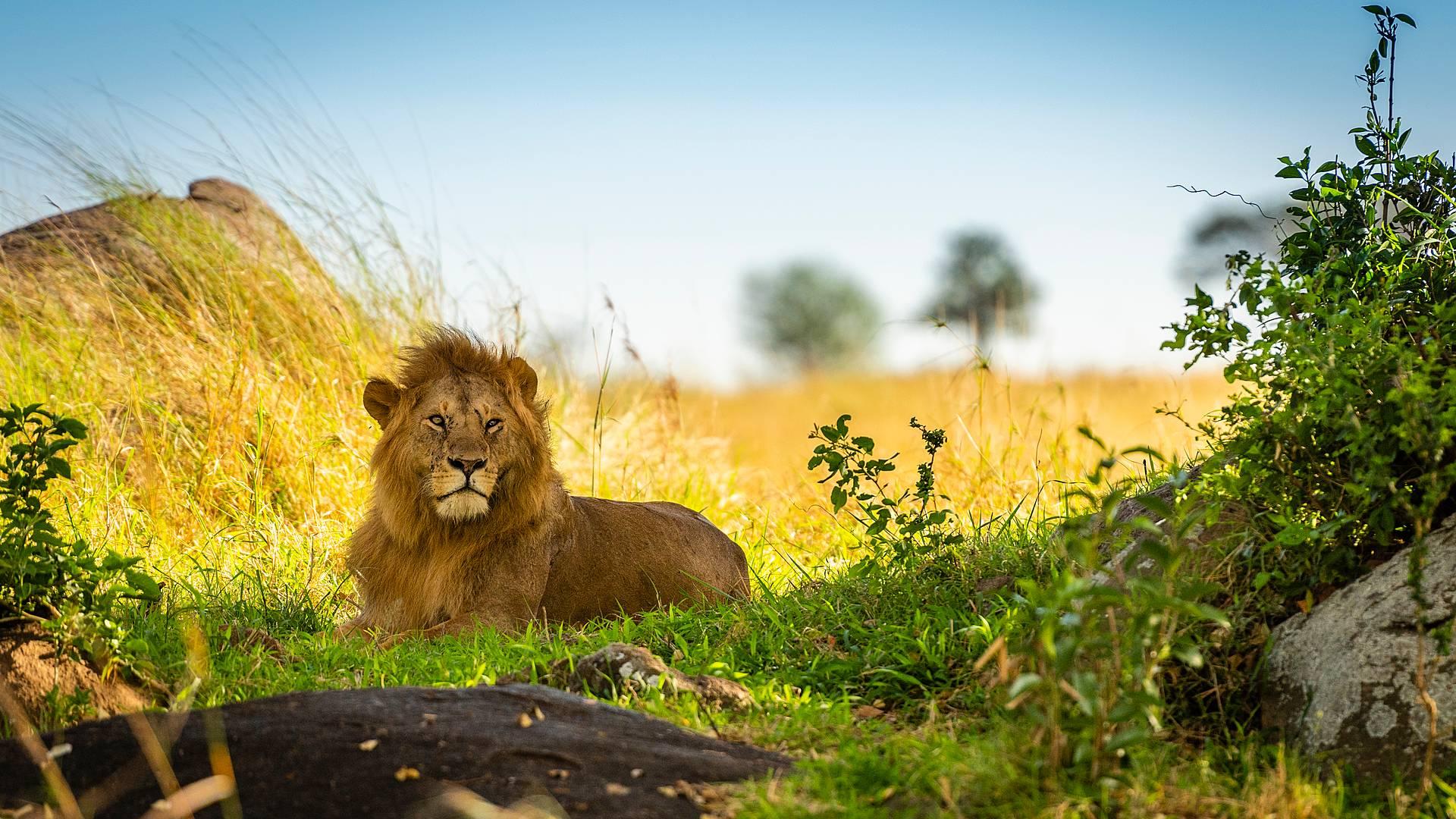Safari charme tra i parchi Tanzani