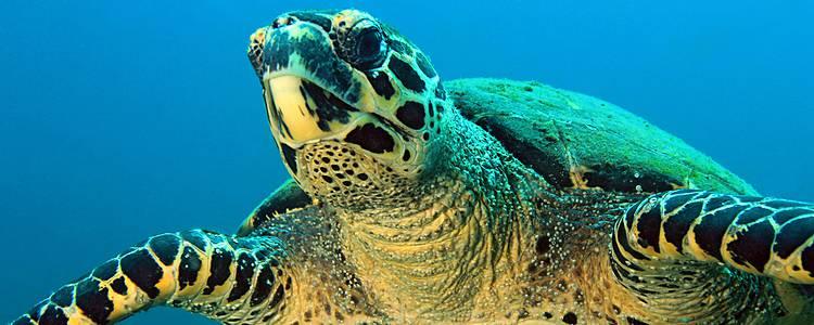 Dans l'intimité des baleines et des tortues du Pacifique