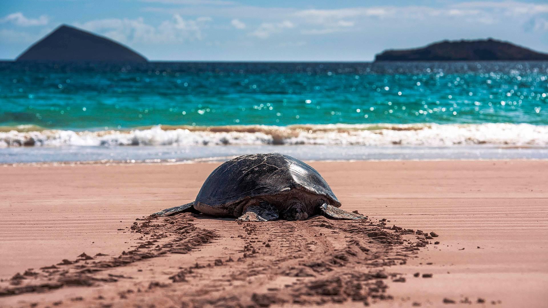 Le Galapagos: Tre isole al centro del mondo.