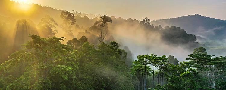 Unvergessliches Naturabenteuer in Borneo