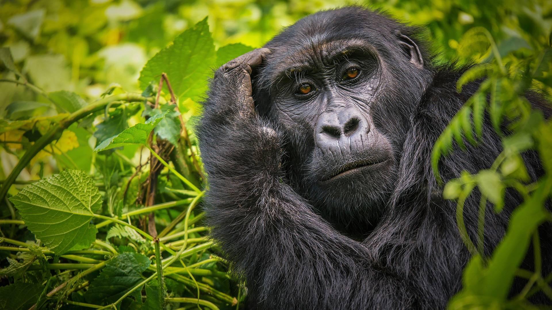 Het beste van Oost Afrika: Gorilla's, Big Five en strand