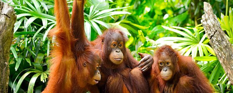 Große Borneo Rundreise