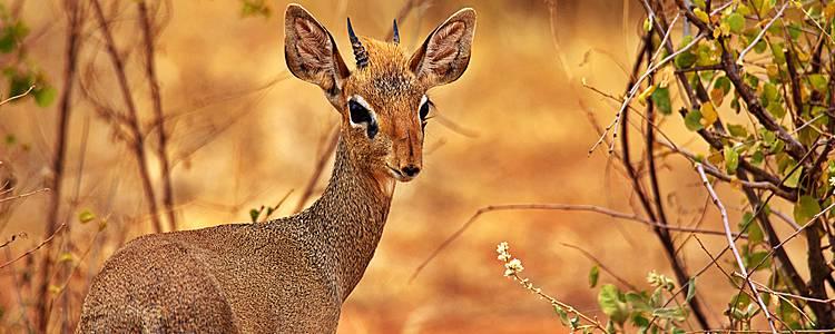 Safari Highlights und lokale Kultur