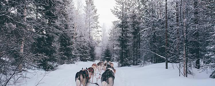 Aventura invernal en Laponia