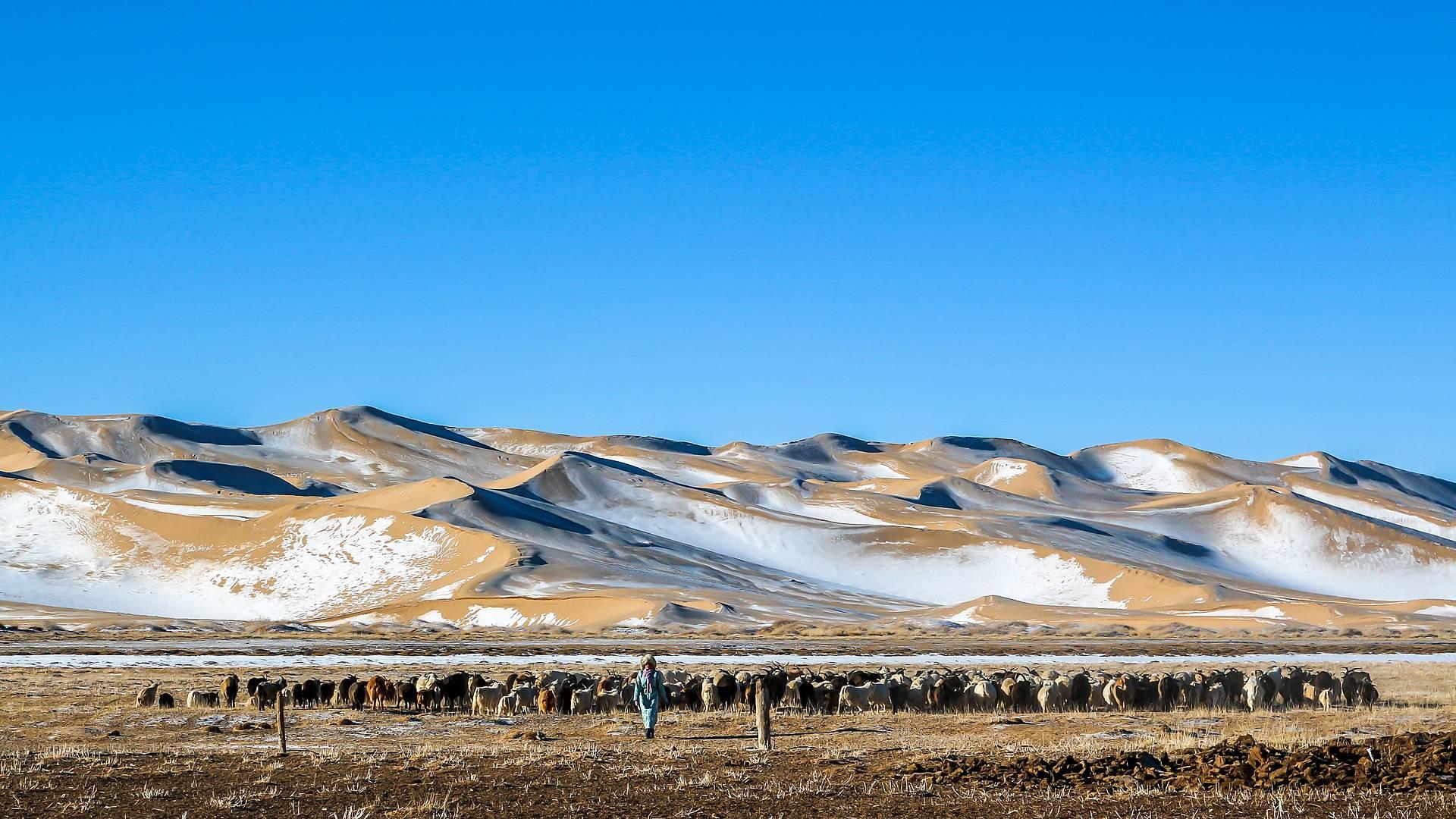 Rencontres hivernales entre désert et steppe