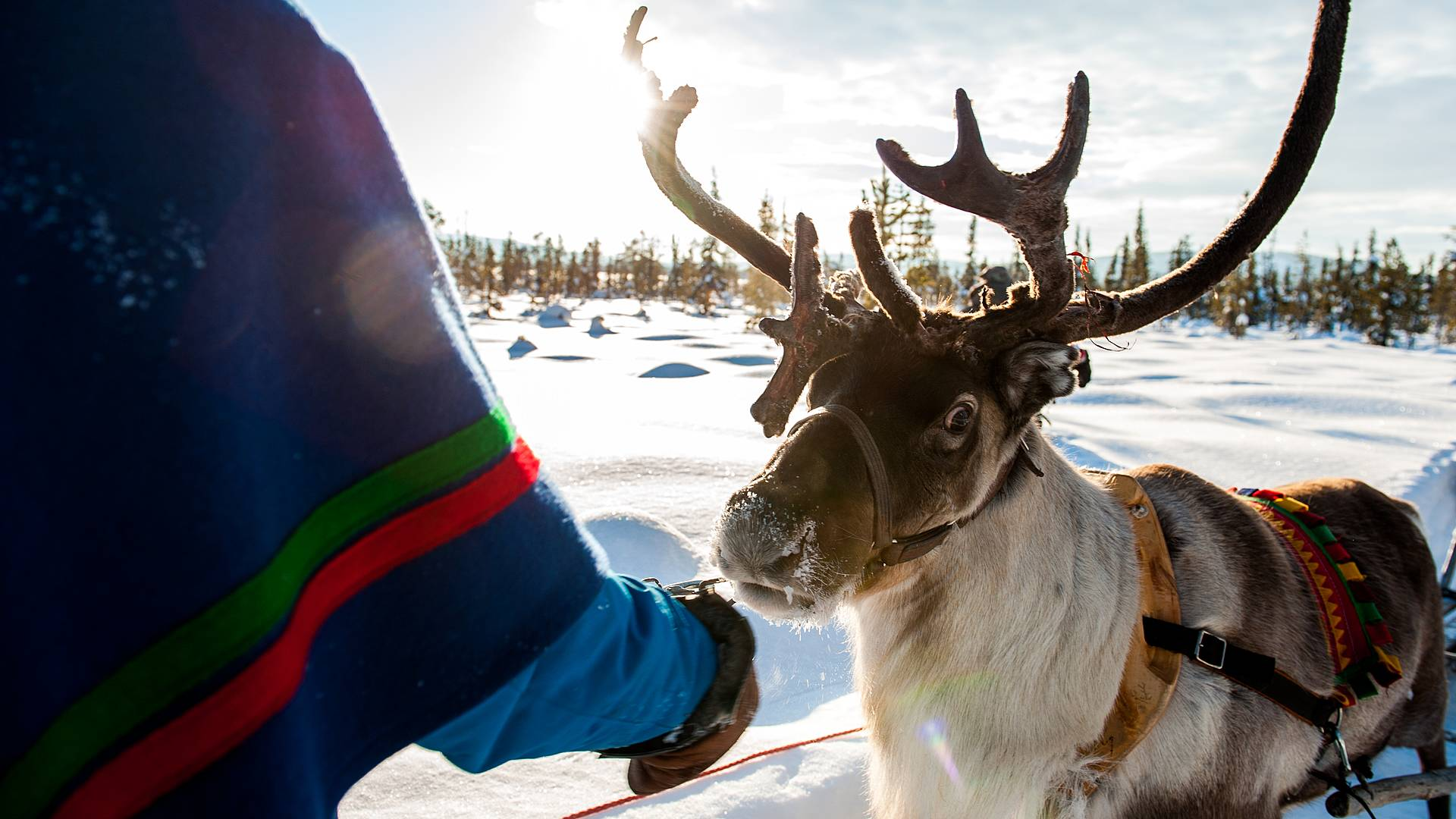 Winterdroom in Kiruna