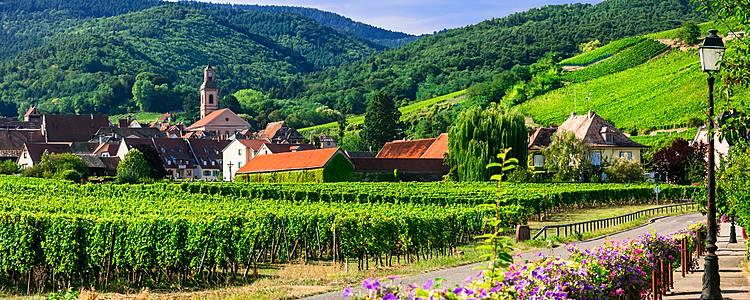 Self drive - wijngaarden en geschiedenis