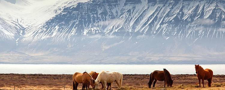 Les essentiels de l'Islande en 10 jours
