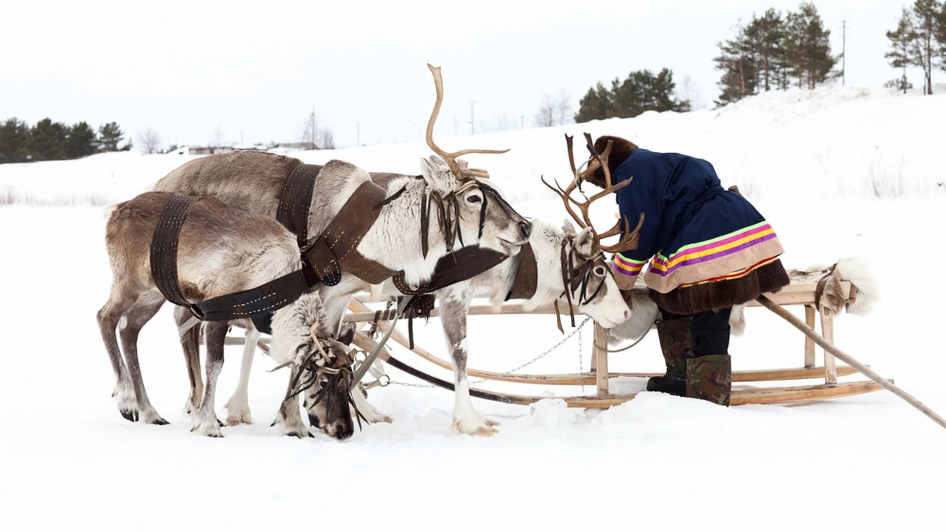Laponie suédoise active en hiver