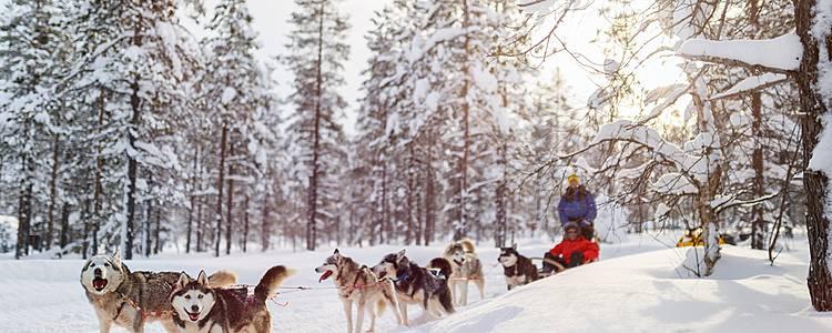Chiens de traîneau et chalets cosy - Séjour d'exception en Laponie suédoise