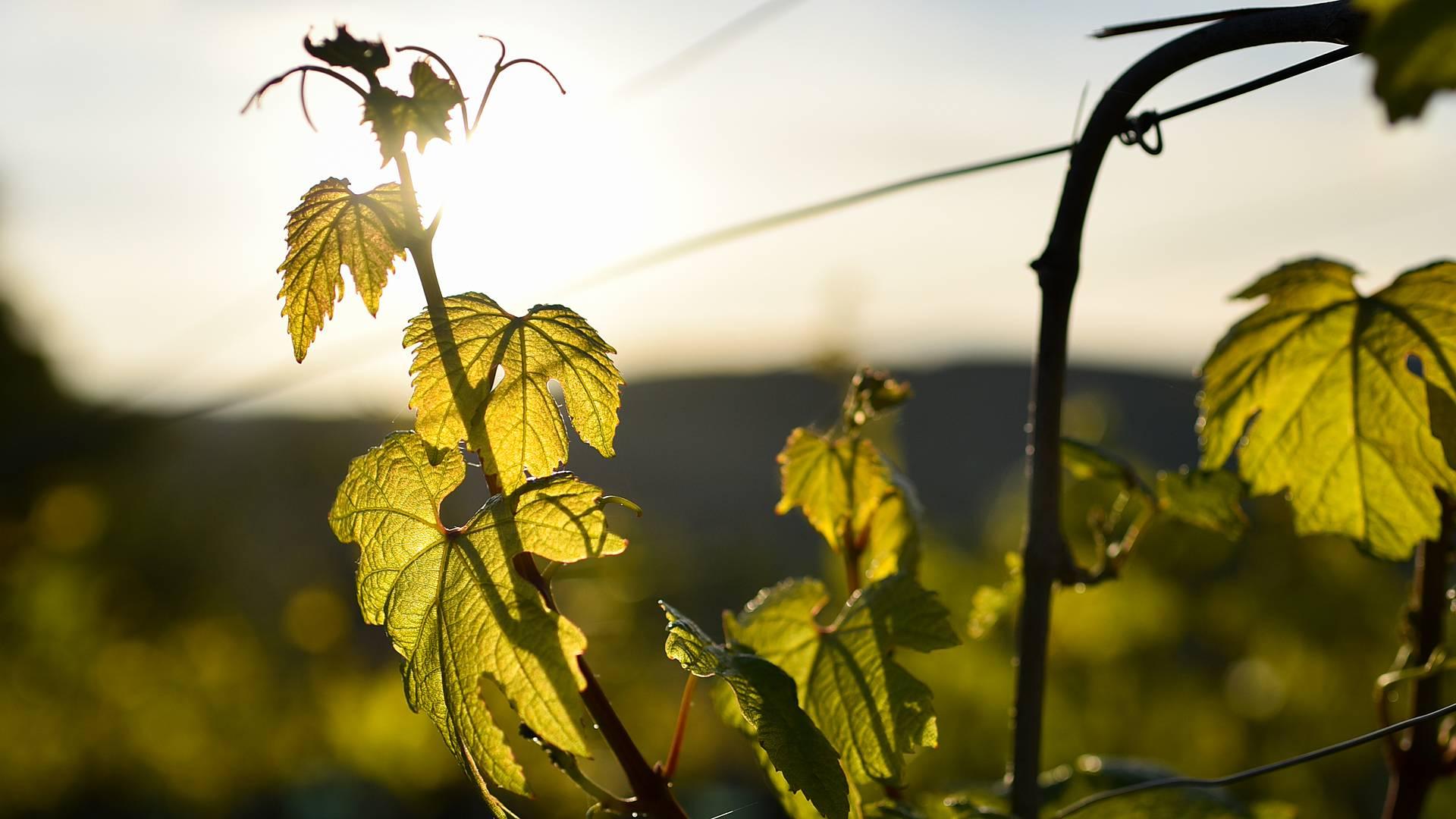 Secrets de forêts et vignes en amoureux‧ses ou en famille