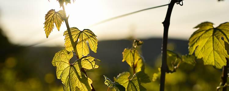 Secrets de forêts et vignes en amoureux ou en famille