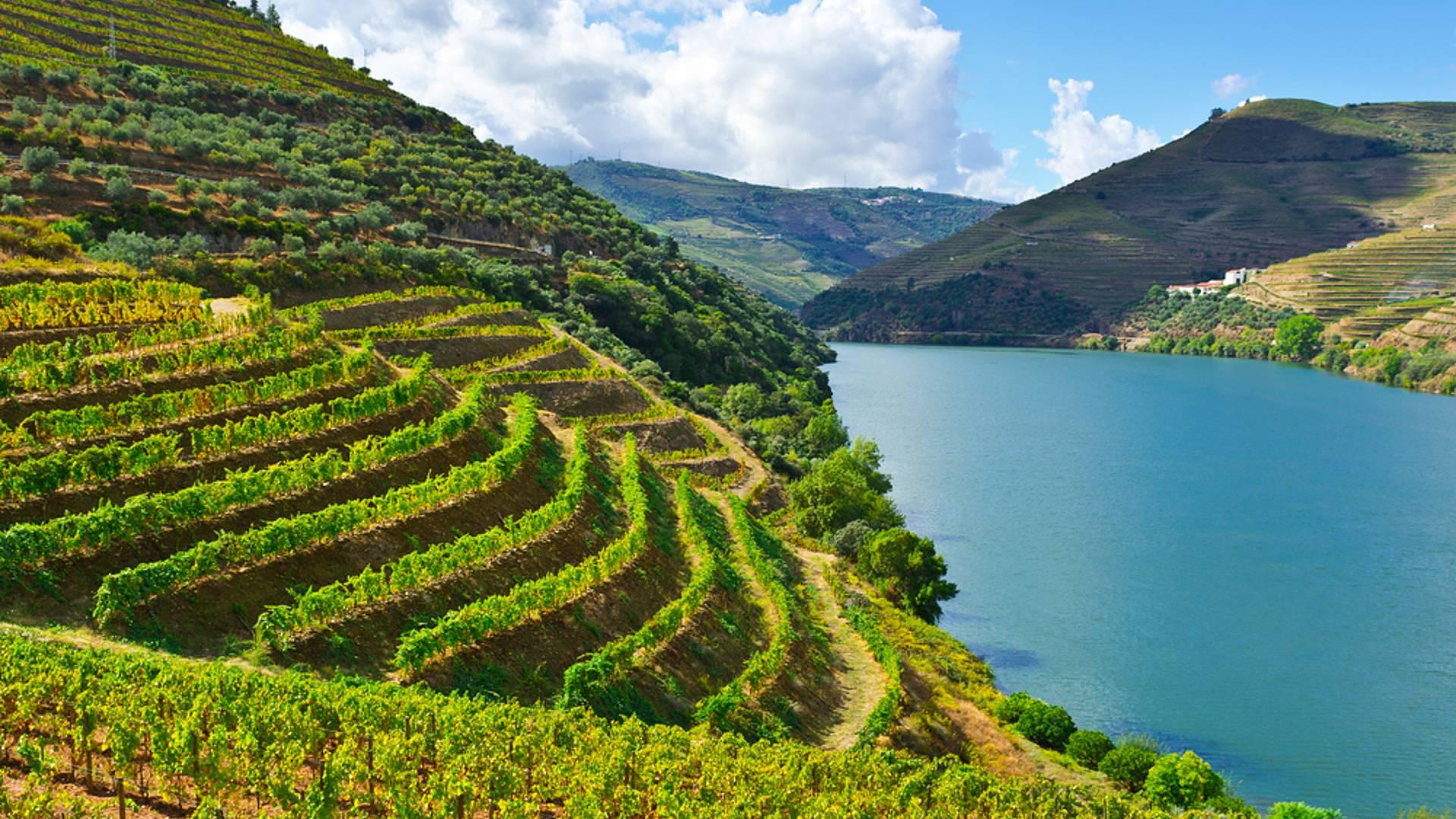 Flora, Fauna, Kulinarik und Wein im Douro Tal