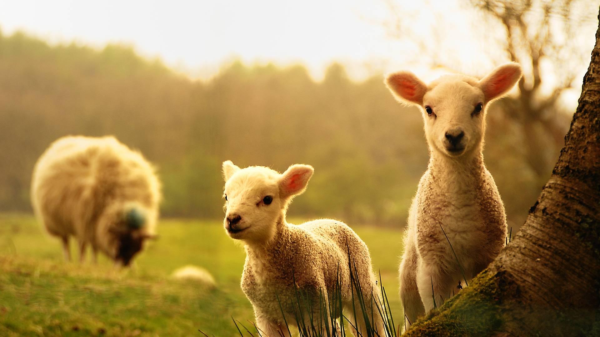 Vacances à la ferme : immersion dans le quotidien d'un berger dans les Pyrénées
