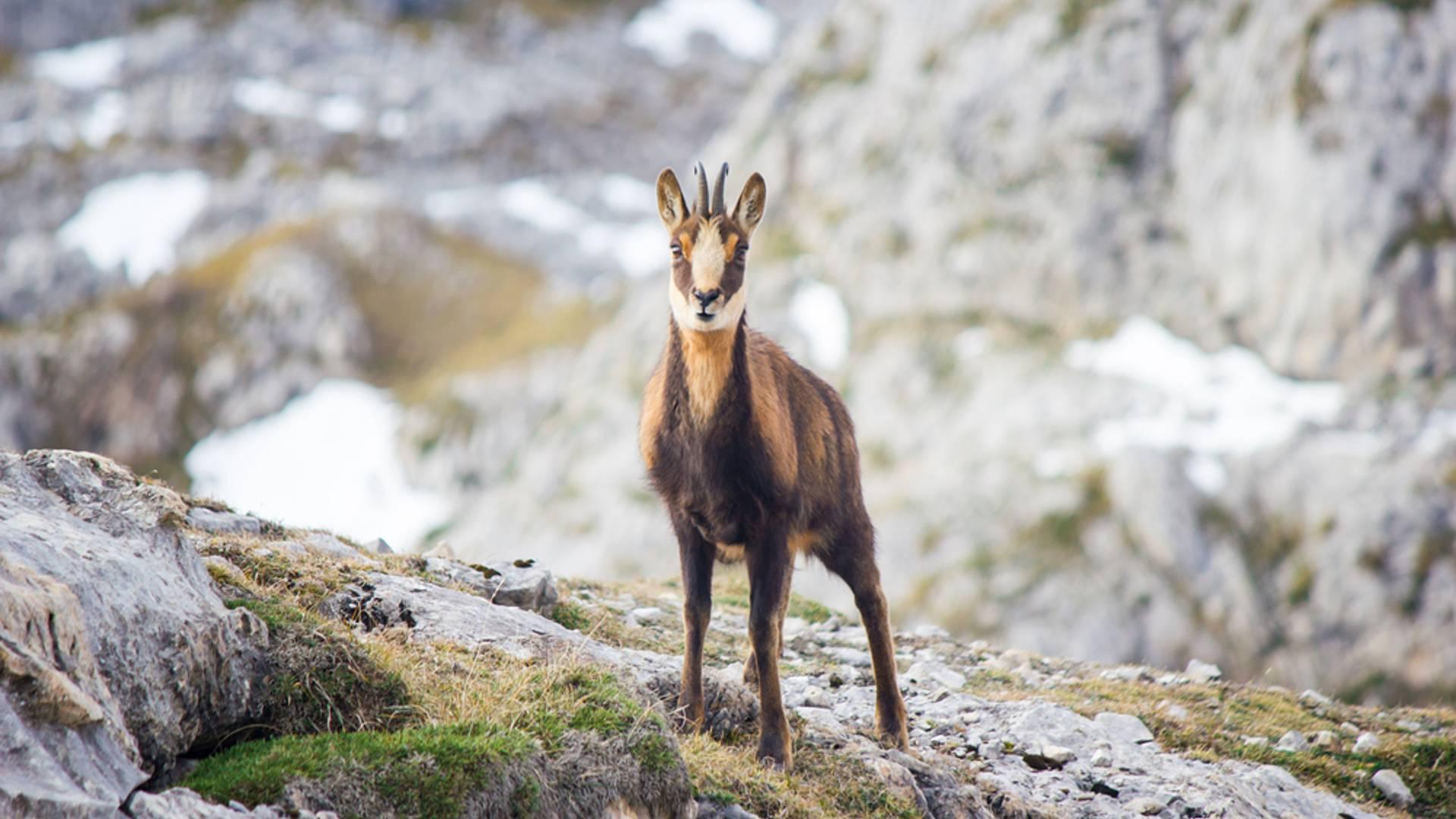 Immersion hivernale en pleine nature dans les Pyrénées