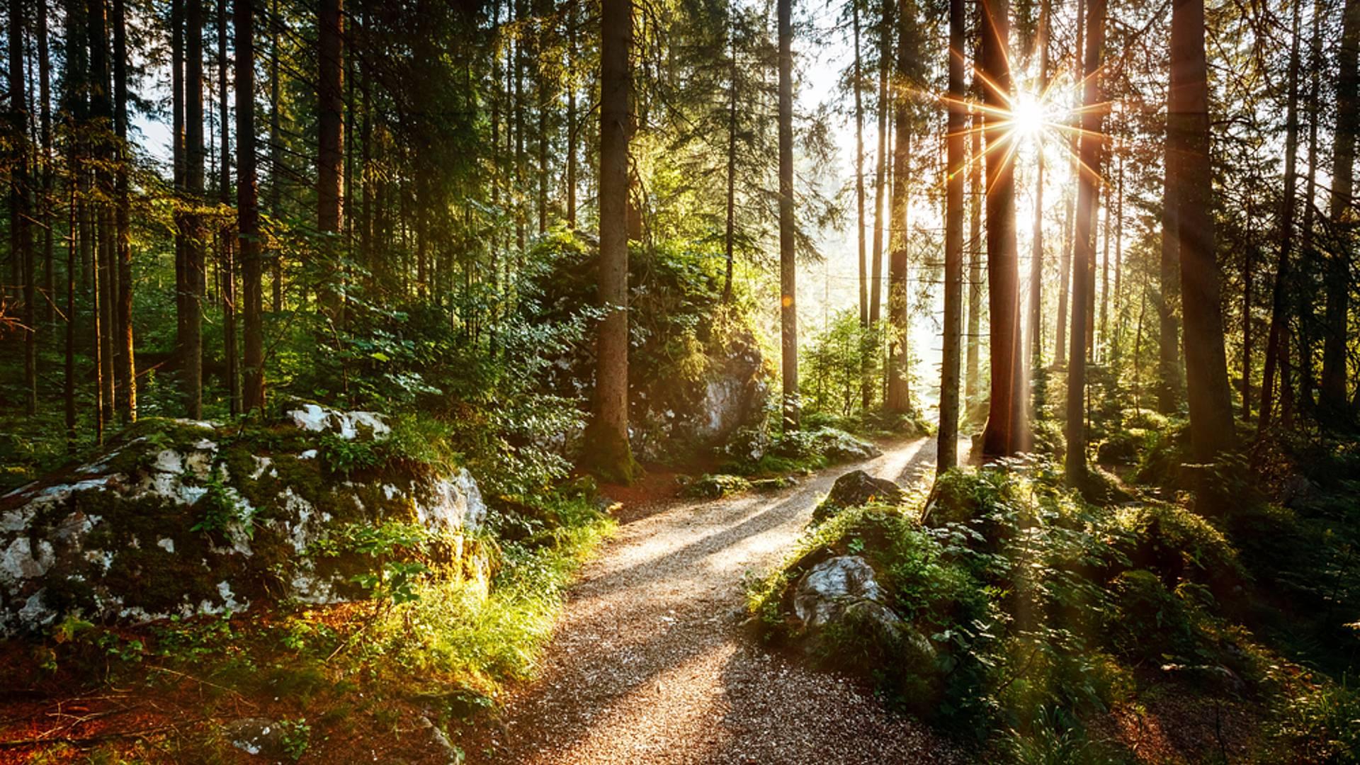 Séjour Luxe et Nature en Forêt de Brocéliande