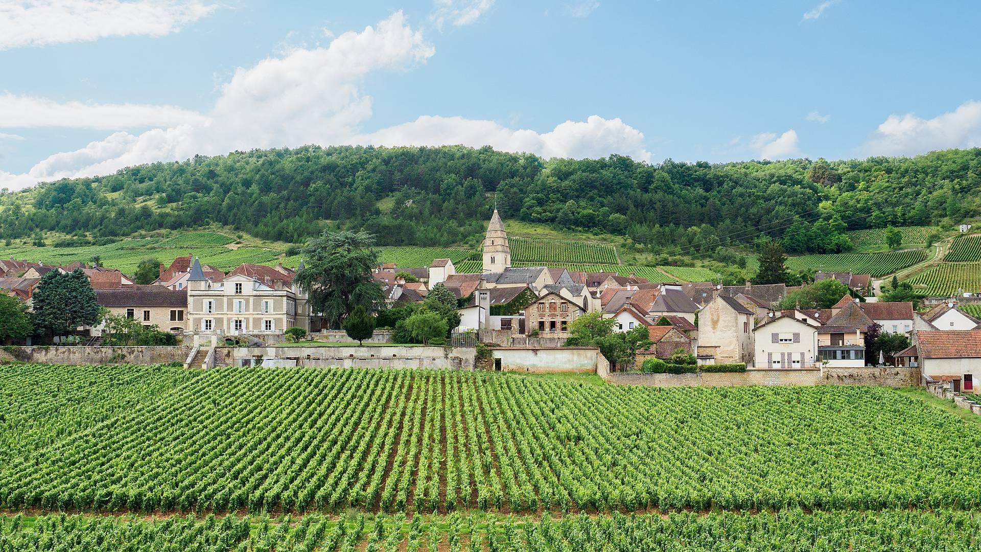 Randonnée à vélo en Bourgogne du Sud, entre vignobles et patrimoine
