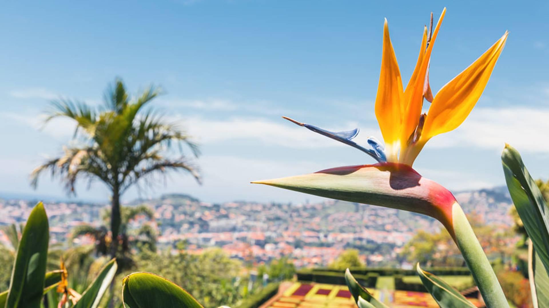 De Lisbonne à l'île aux fleurs