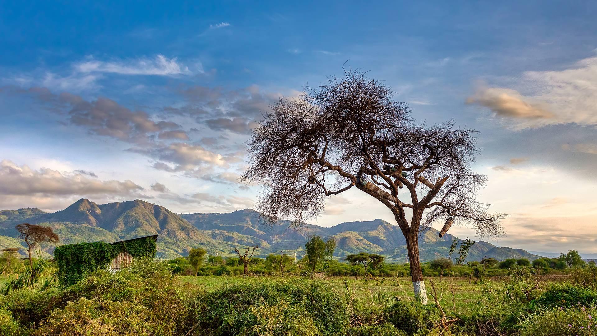 Tribus de l'Omo et lacs de Langano