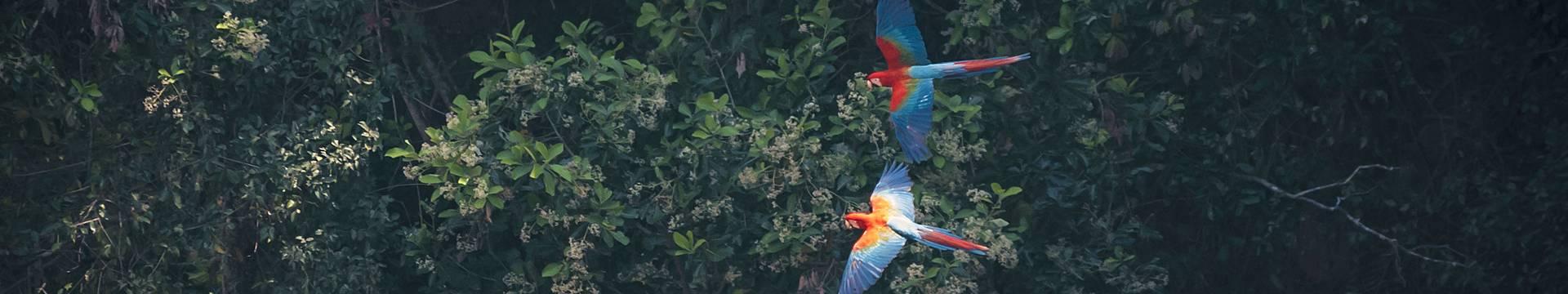 Amazonie Brésilienne