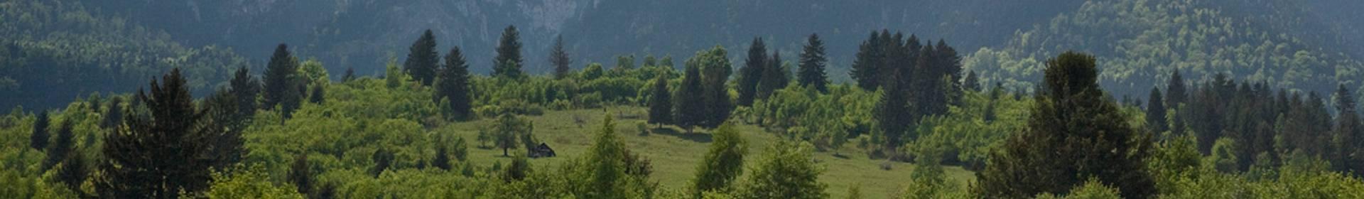 Piatra Craiului