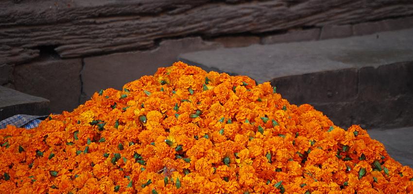 Des fleurs sur le marché