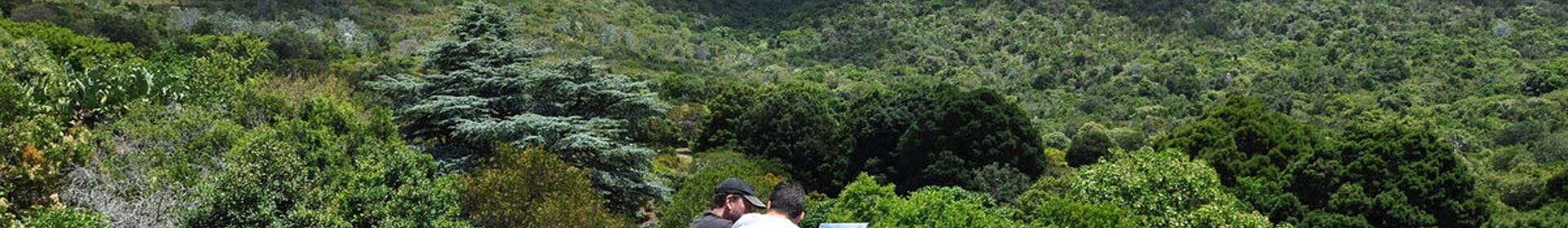 2. Kirstenbosch