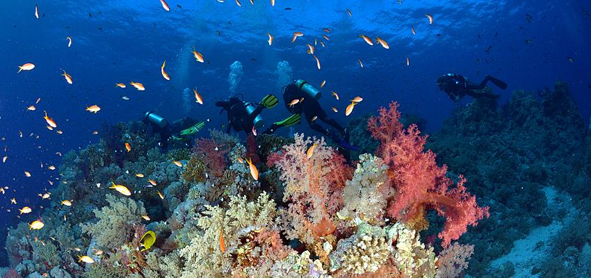 Fondos marinos del parque Ras Mohammed