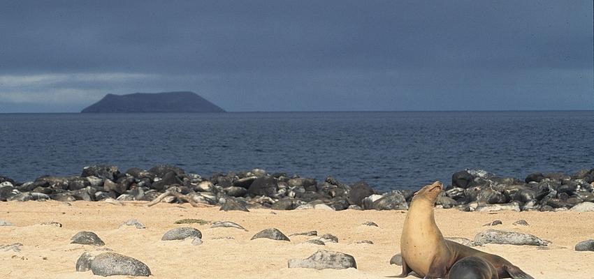 Sur la plage aux Galápagos