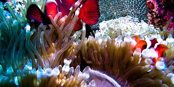 Diving in Balinese waters