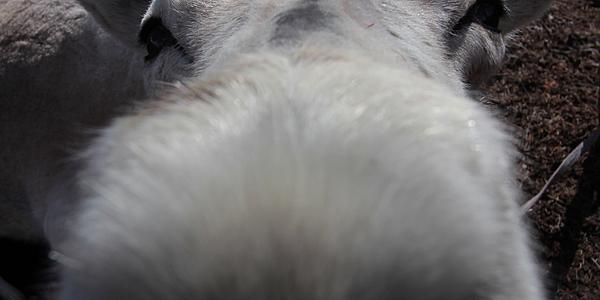 Un reno curioso