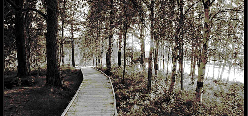 Les sentiers aménagés à Rovaniemi