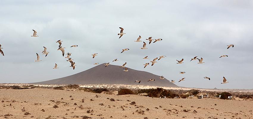 En las Islas Canarias
