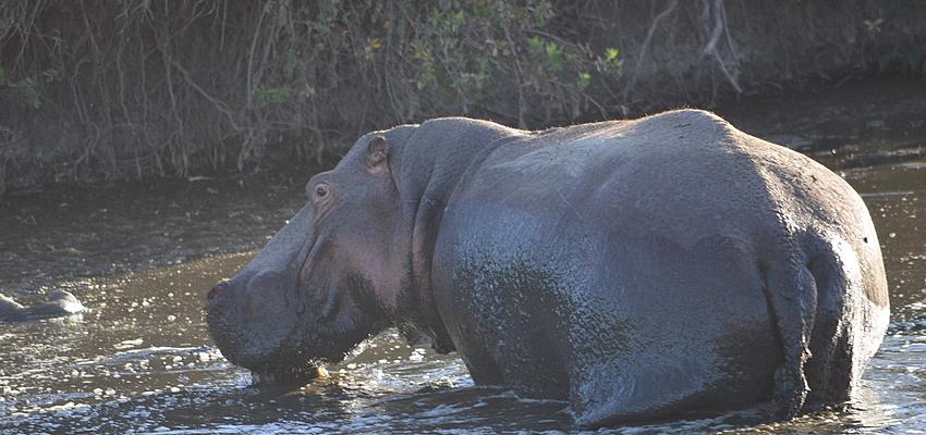 Au Botswana