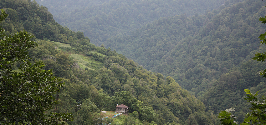 In Georgia